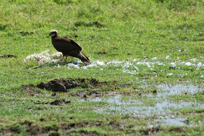 Amboseli-03618.jpg
