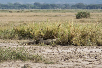 Amboseli-03621.jpg