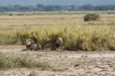 Amboseli-03629.jpg