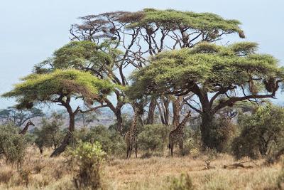 Amboseli-03653.jpg