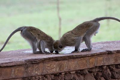 Amboseli-03671.jpg