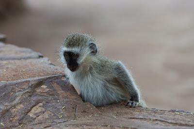 Amboseli-03679.jpg
