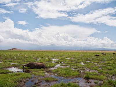 Amboseli-1010419.jpg