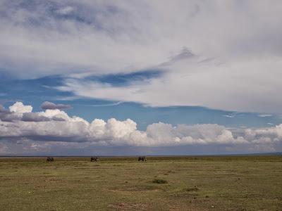 Amboseli-1010427.jpg