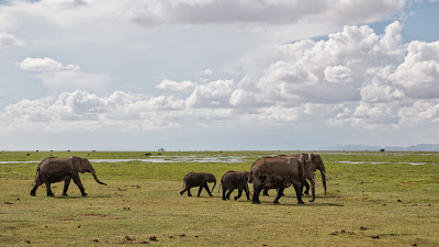 Amboseli-1010433.jpg