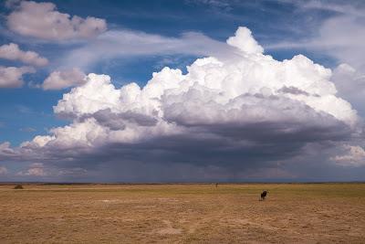 Amboseli-1010440.jpg