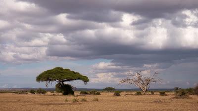 Amboseli-1010464.jpg