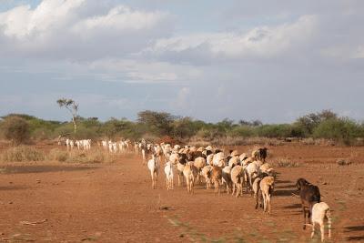 Amboseli-1010491.jpg