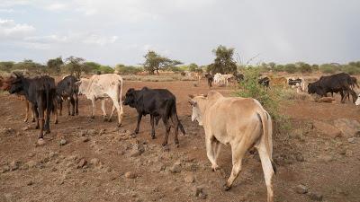 Amboseli-1010496.jpg