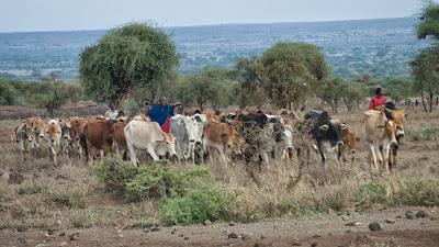 Amboseli-1120903.jpg