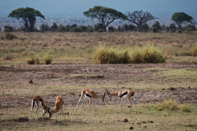 Amboseli-1120910.jpg