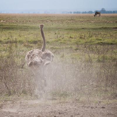 Amboseli-1120936.jpg