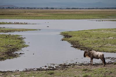 Amboseli-1120938.jpg