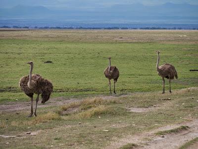 Amboseli-1120943.jpg