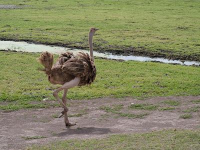 Amboseli-1120945.jpg