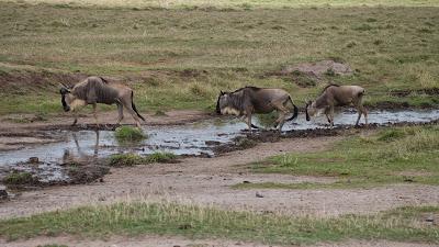 Amboseli-1120957.jpg