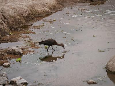Amboseli-1120961.jpg