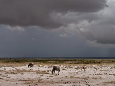 Amboseli-1120973.jpg