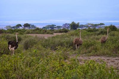 Amboseli-1120982.jpg