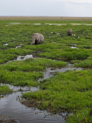 Amboseli-1120983.jpg