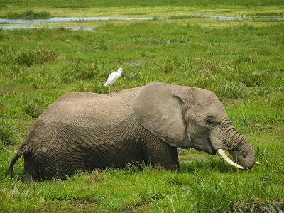 Amboseli-1130007.jpg