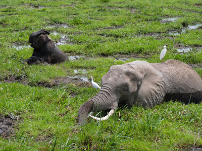 Amboseli-1130015.jpg