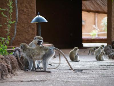 Amboseli-1130072.jpg