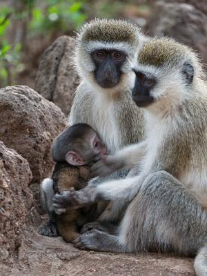 Amboseli-1130088.jpg