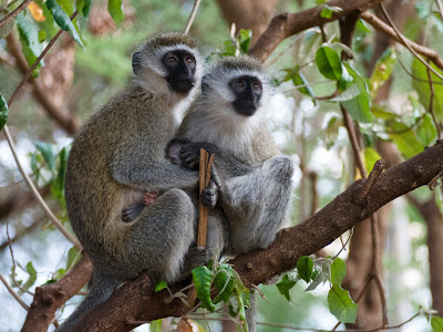 Amboseli-1130101.jpg