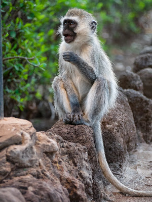 Amboseli-1130103.jpg