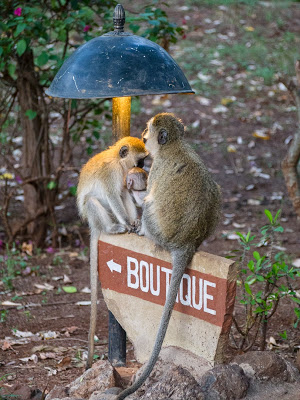 Amboseli-1130118.jpg