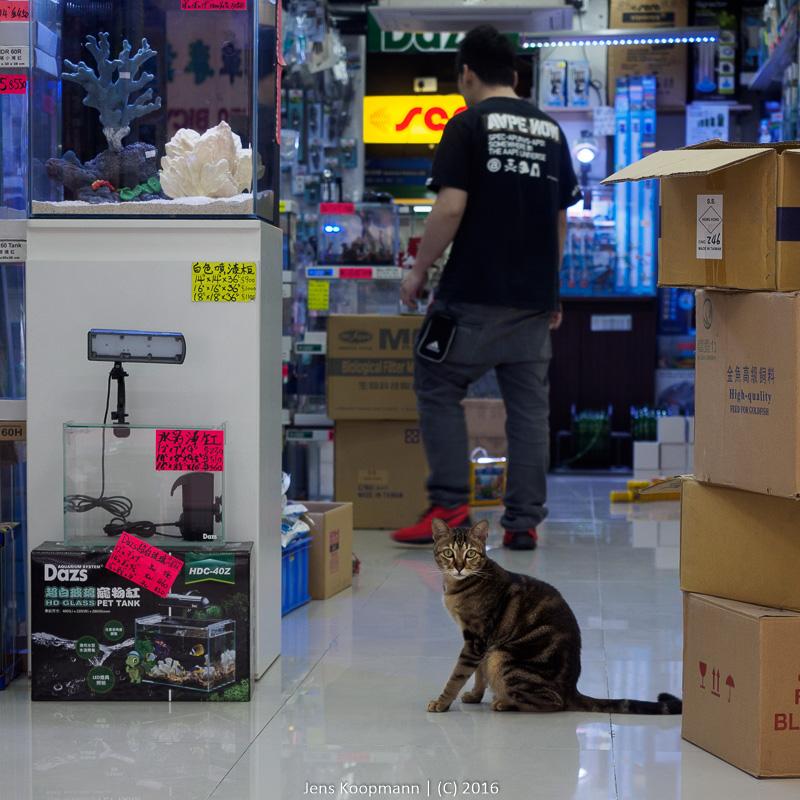 Traumjob einer Katze | Stichwörter: Hong Kong, Katze, Zierfischmarkt | Kategorien: Portfolio, Tierfotografie