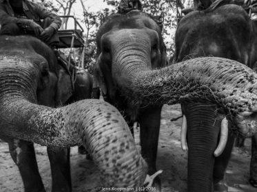 Eine Kreuzfahrt durch Asien – Tag 12: Einfach Elefantös!