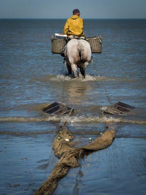 Krabbenfischer zu Pferde