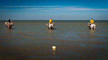 Urlaub an der Belgischen Küste – Tag 12: Die Stienestekers von Koksijde