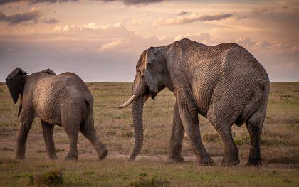 Ich mache eine Pause – es geht auf Safari